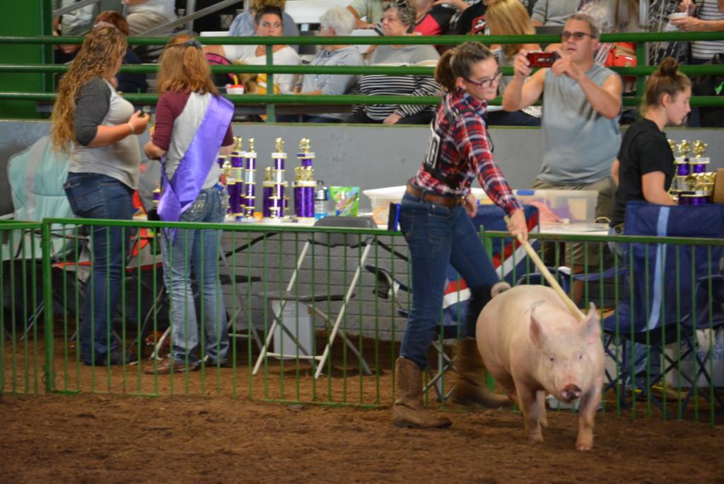 Swine Show27