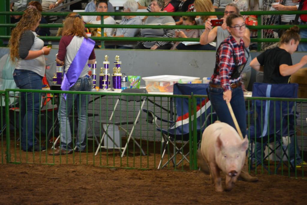 Swine Show28