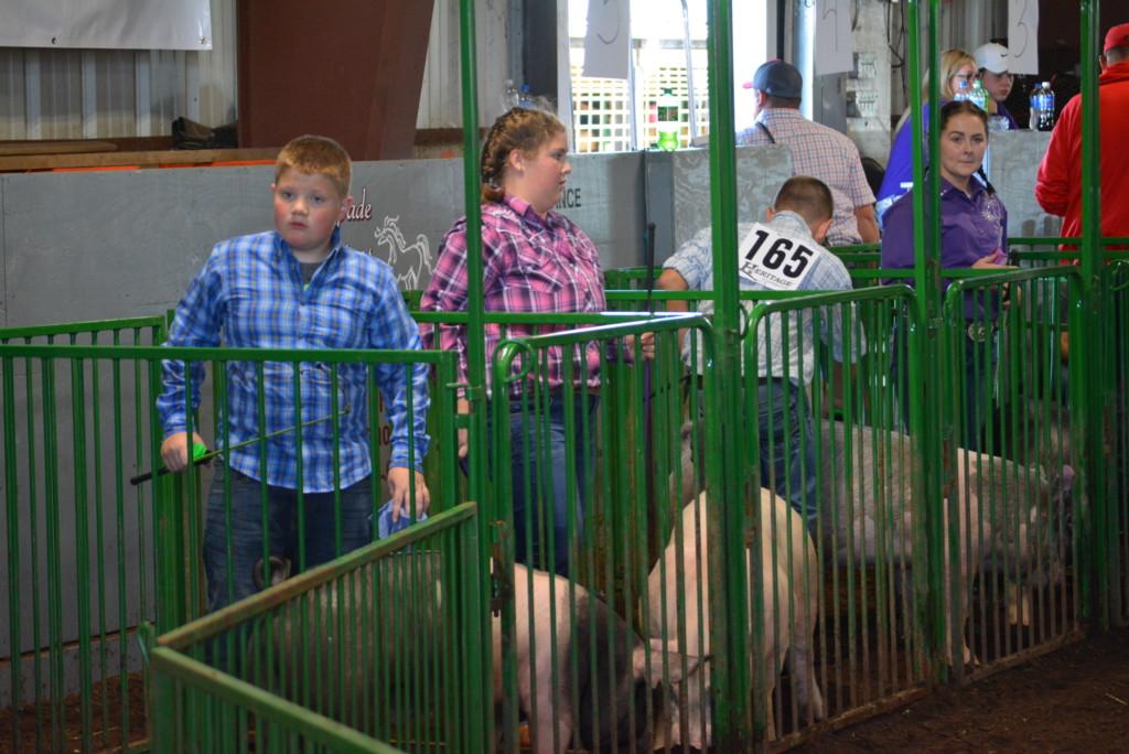 Swine Show29