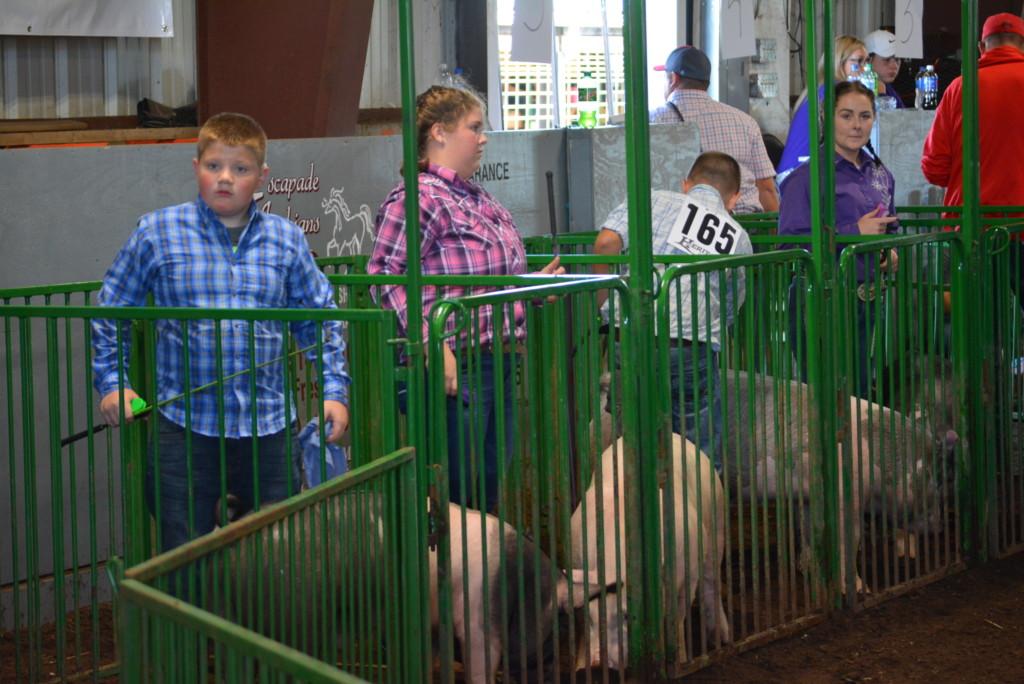 Swine Show30