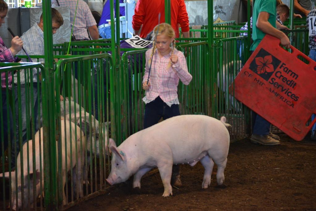 Swine Show31