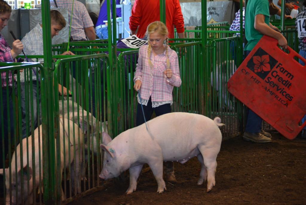 Swine Show32