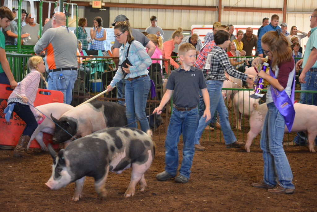 Swine Show33