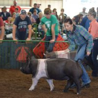 Rettos wins showmanship award