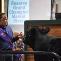 Junior fair livestock auction sellers have big plans