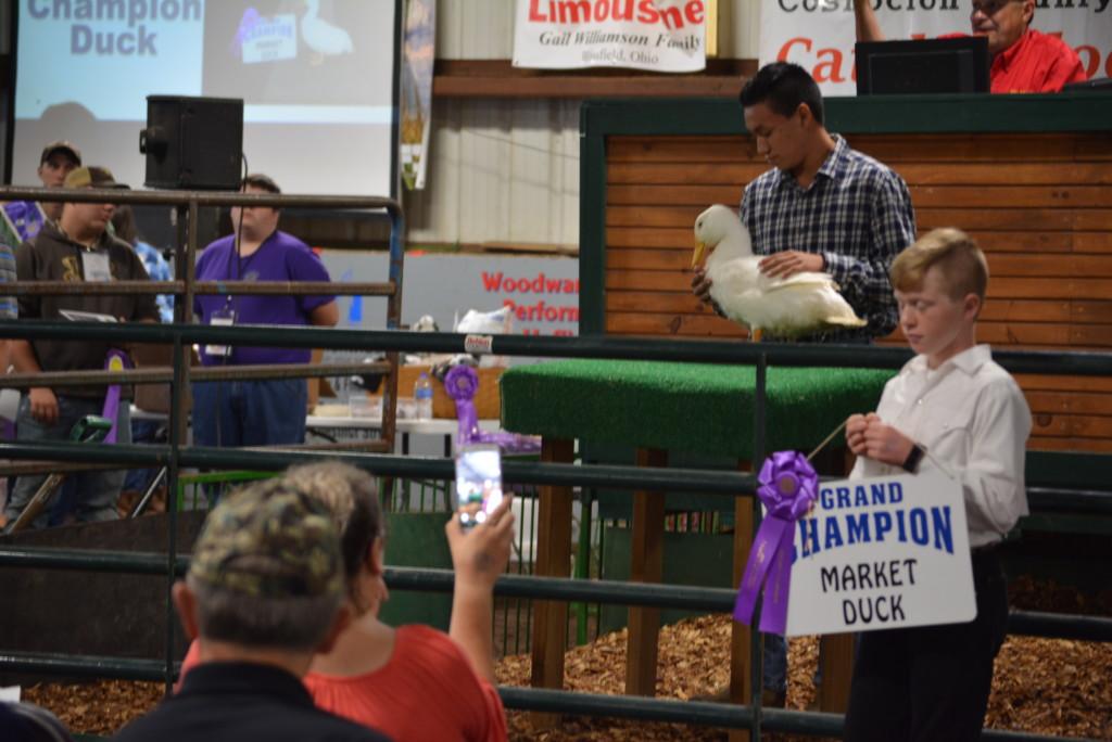 junior fair sale of champions30