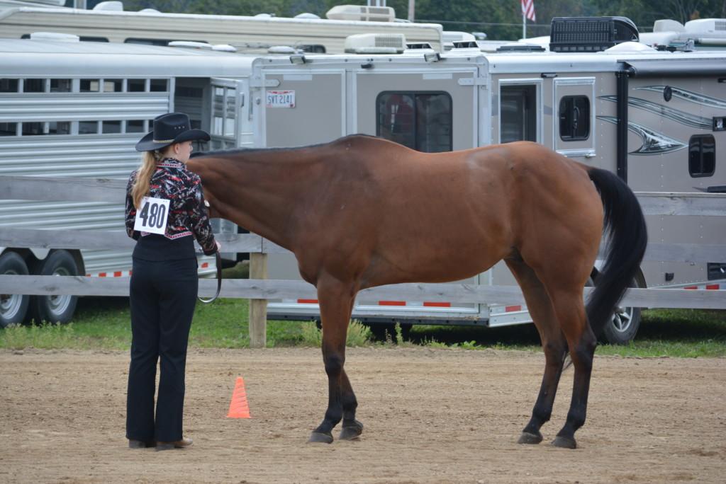 open horse show02