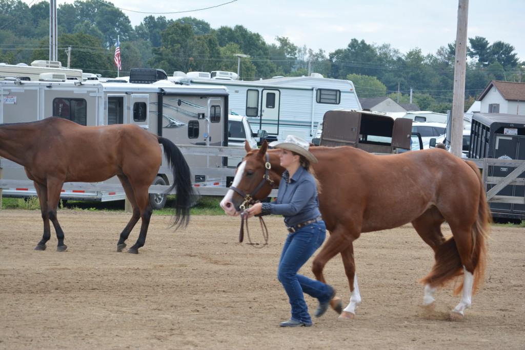 open horse show03