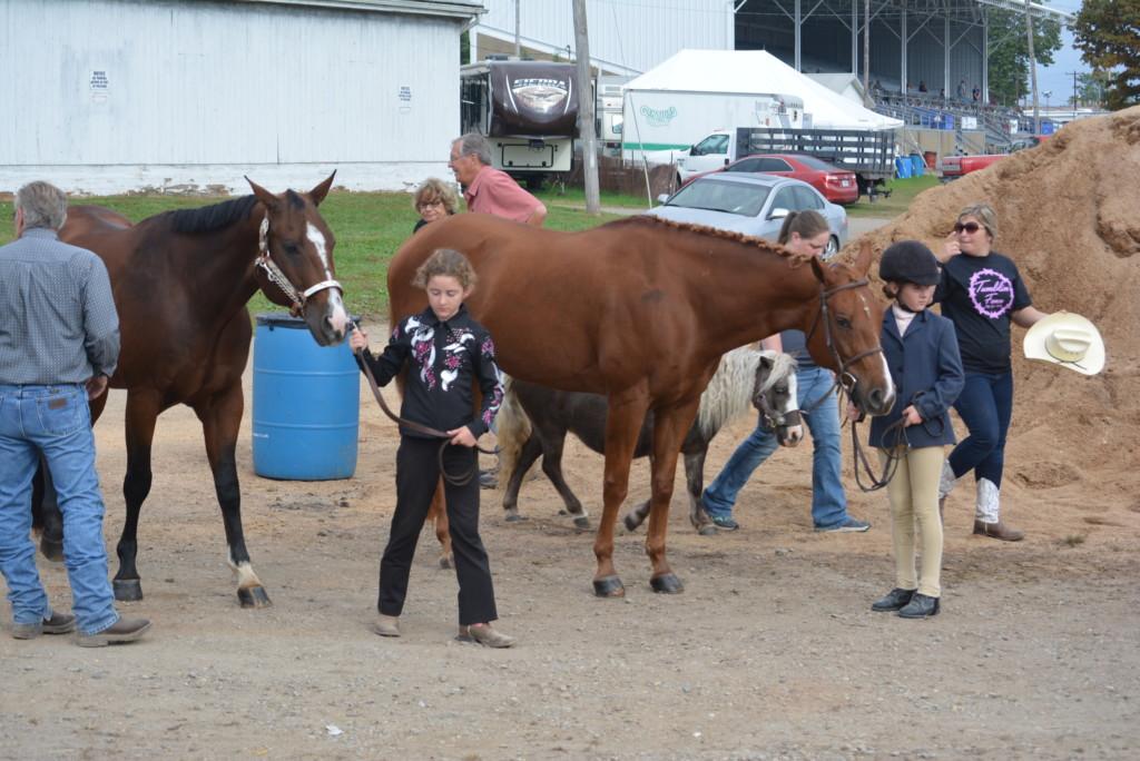 open horse show11