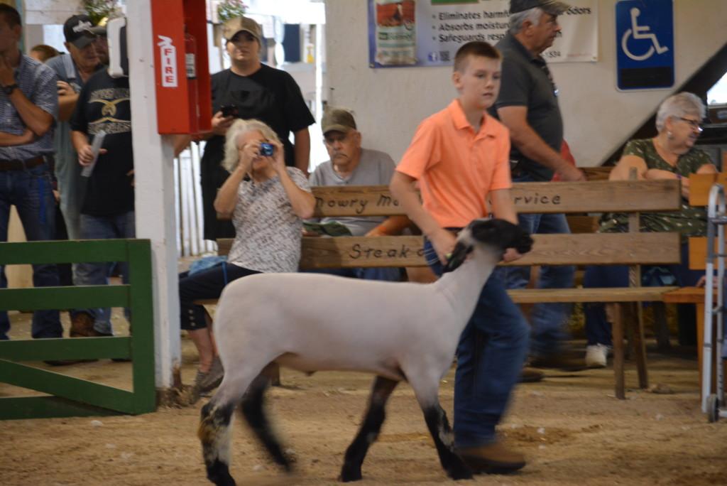 sheep show05