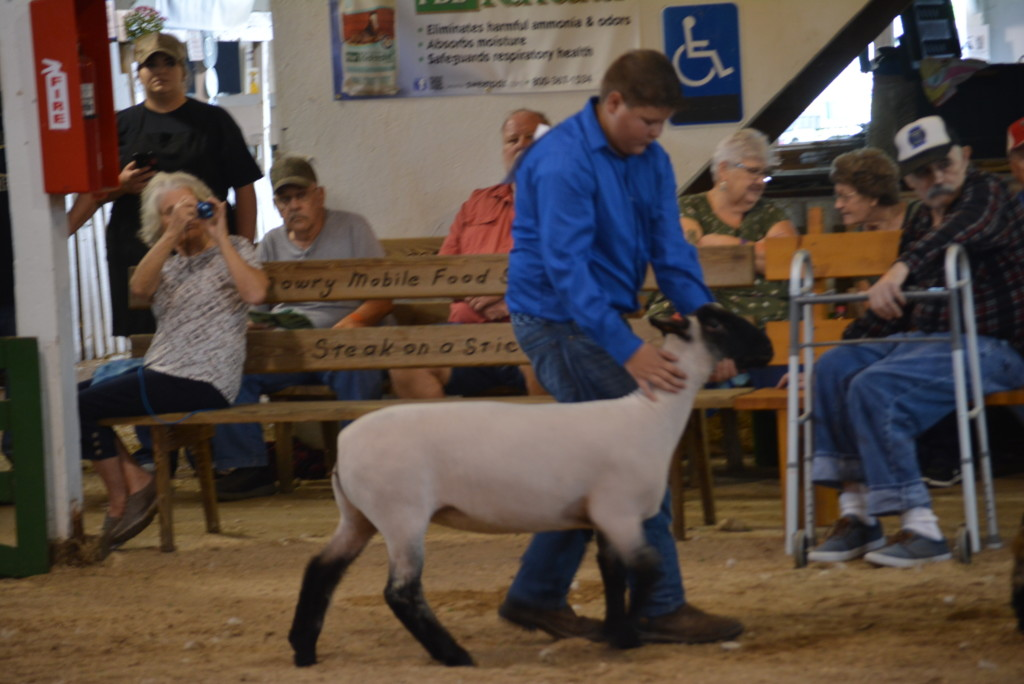 sheep show06