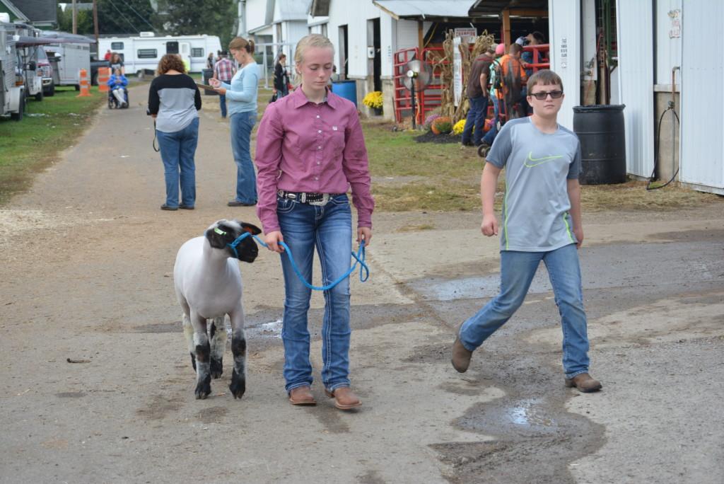sheep show09